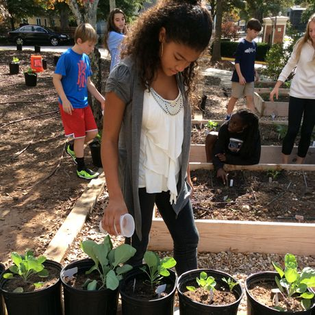 Sustainability at Woodward Academy: Gardening at the Middle School